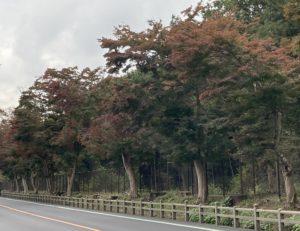 平林寺の紅葉の様子2020
