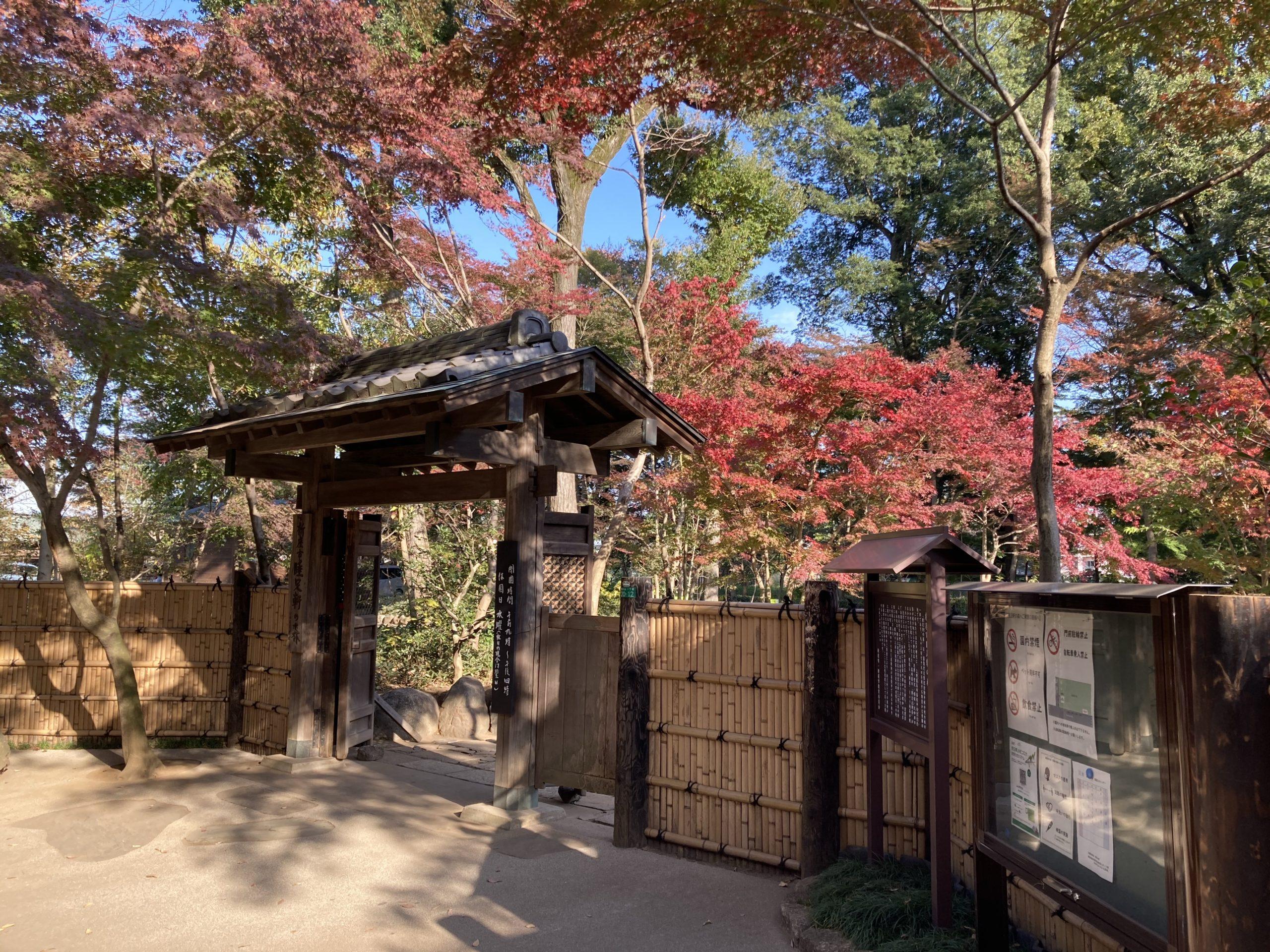 平林寺 睡足軒の森 紅葉2020