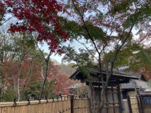 平林寺の紅葉 睡足軒の森